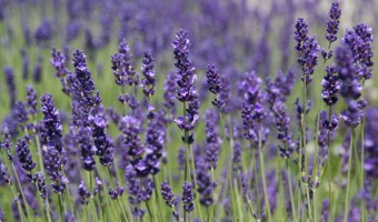 A Few of My Favorite Things: Essential Oil Blends