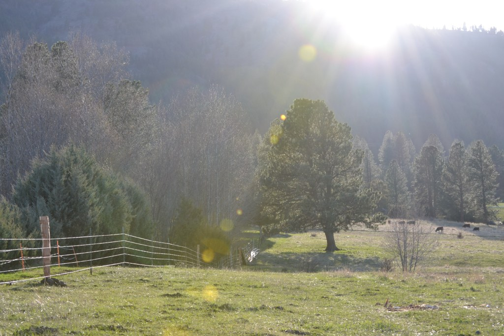 Afternoon Sun Spots