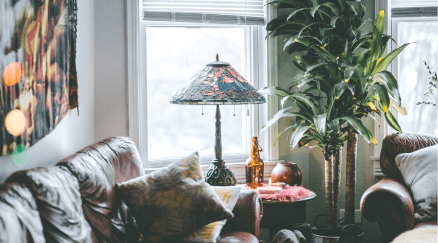 17 Best Living Room Plants Use These Plants To Brighten Your Home