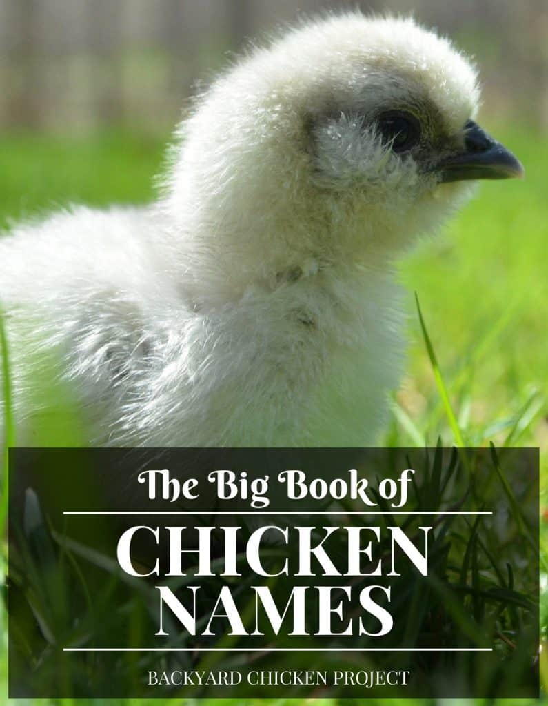 The Even More Essential list of Chicken Names