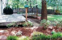 Tips for making a naturally bird-friendly yard
