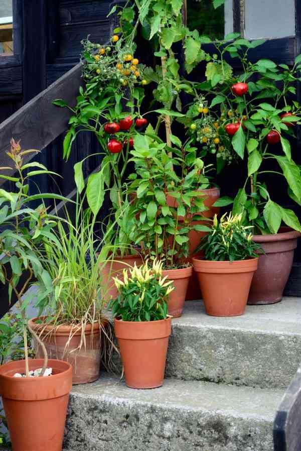 Container Vegetable Garden Design Ideas