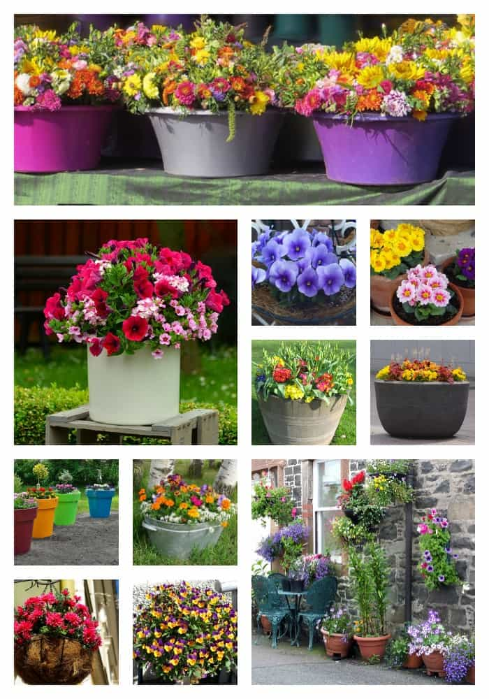 18 Gorgeous Container Gardening Ideas For Beginners Backyard