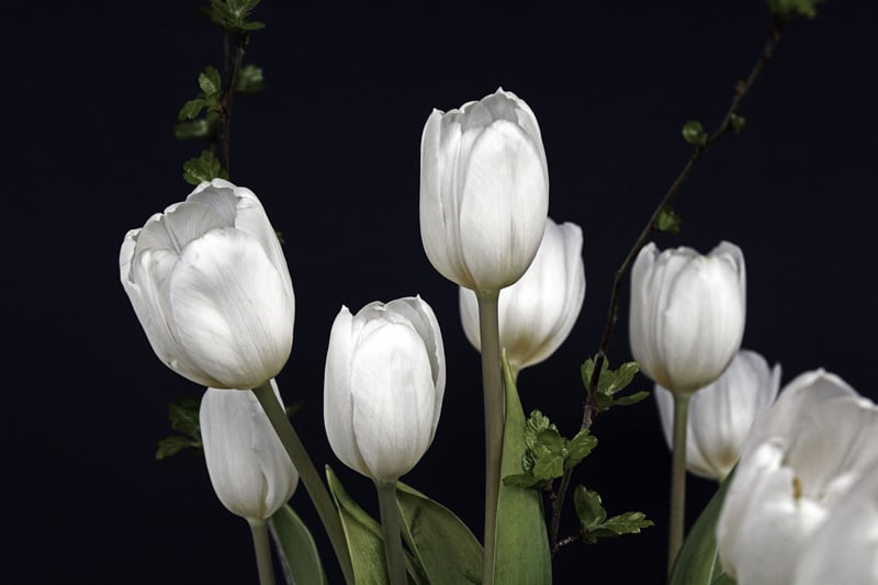 Beautiful Girl In Garden Wallpaper 8 Tulip Varieties That Will Delight Your Senses