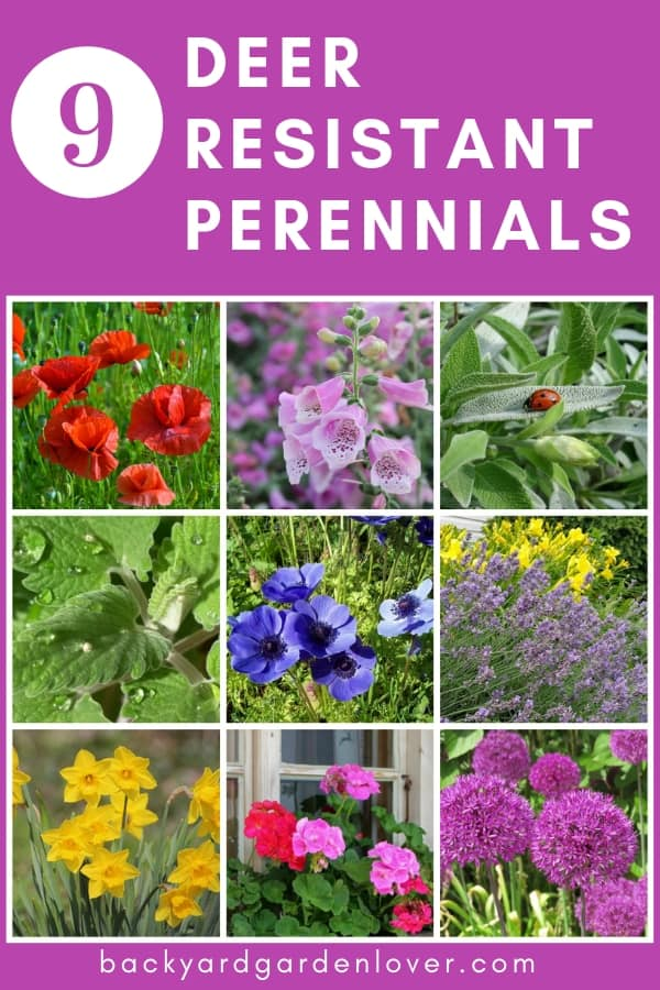 These 10 Deer Resistant Perennials Are Beautiful Aromatic And Critter Proof