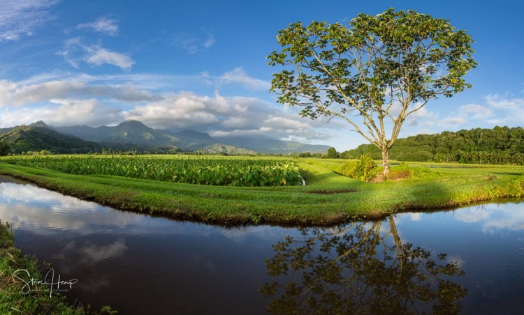 Taro fields in Hanalei valley with Na Pali mountains in the background