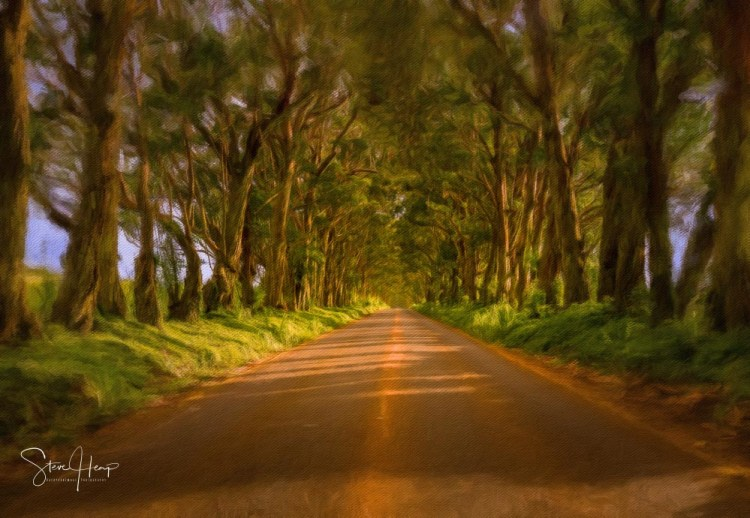 Digital oil painting of the famous tree tunnel on the road to Koloa and Poipu on Kauai