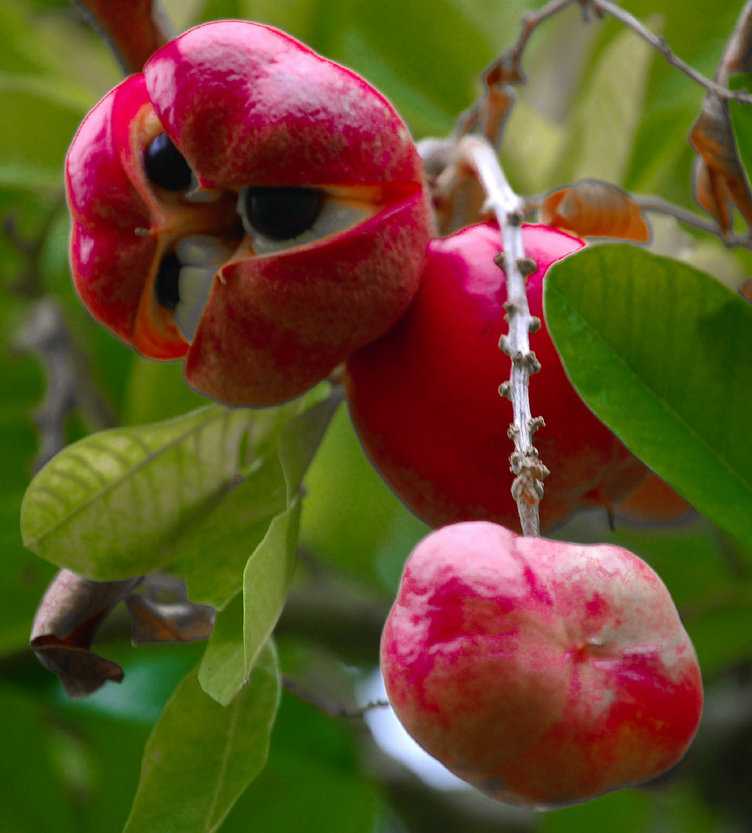 21 most exotic fruits