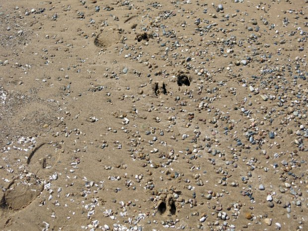 Saugatuck-Beach