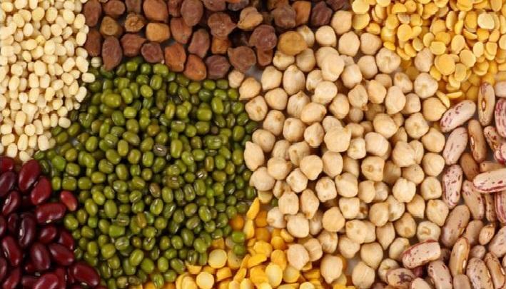 Corn Seed and Pulses Traders Of The Gujar Khan District Rawalpindi