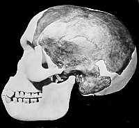 The Piltdown skull