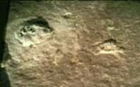 The trilobite fossil