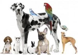 _wsb_456x323_APAP+Animals