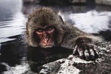 Daily Fresh Baked monkey