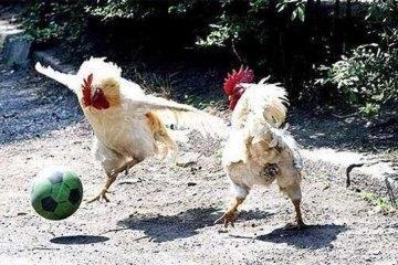 Animals doing sports