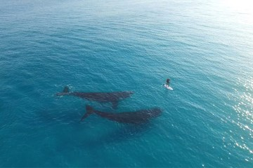 Boarding with Whales