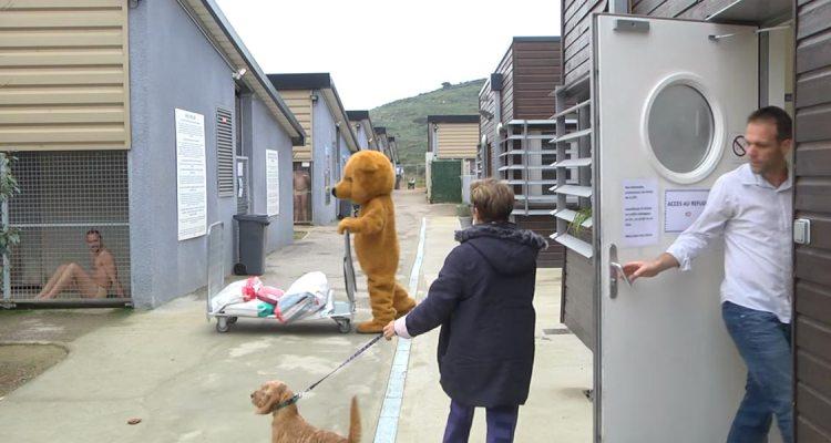 Animal found shelter