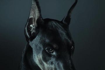 Daily Fresh Baked Randomness black scary dog