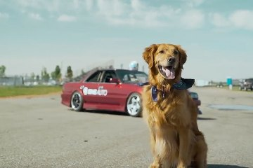 Jeff The Drift Dog