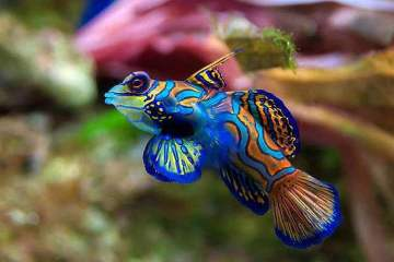awesome color fish
