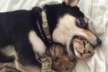 dog eat cat funny