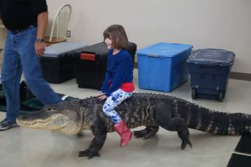 Little Katie Riding an Real Alligator