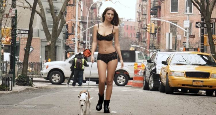 Dog Humps While Walking