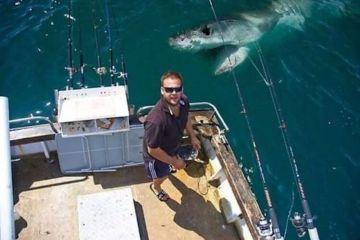 shark randomness