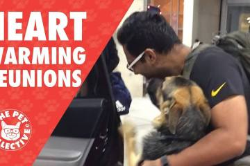 Dogs Reuniting With Their Owners
