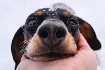 Daily Fresh Baked Randomness (35 Photos) 24 cute dog in the snow