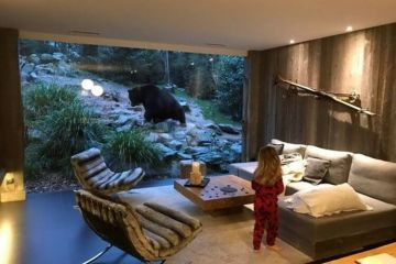 Daily Fresh Baked Randomness (37 Photos) 1 bear outside the house