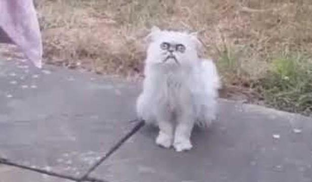 A Weird-Looking Stray Cat 1