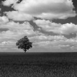 Craig Gorham, Lone Tree