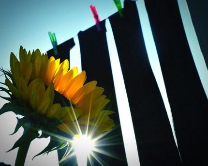 sunflower-sunlight-school-trousers-karen