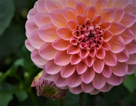 Late bloomer (Tanya Wren)