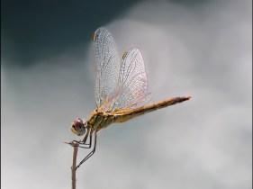 Dragonfly,MonikaWasilewska