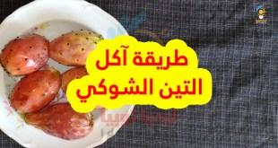 طريقة آكل التين الشوكي