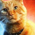Captain Marvel: Brie Larson e Samuel L. Jackson sulla loro esperienza sul set con il gatto Goose