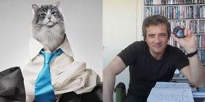 una vita da gatto banner