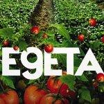 Il Vegetale: il poster del film con Fabio Rovazzi