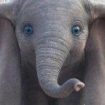 Dumbo: il nuovo trailer italiano del film di Tim Burton!