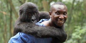 virunga documentario leonardo dicaprio gorilla