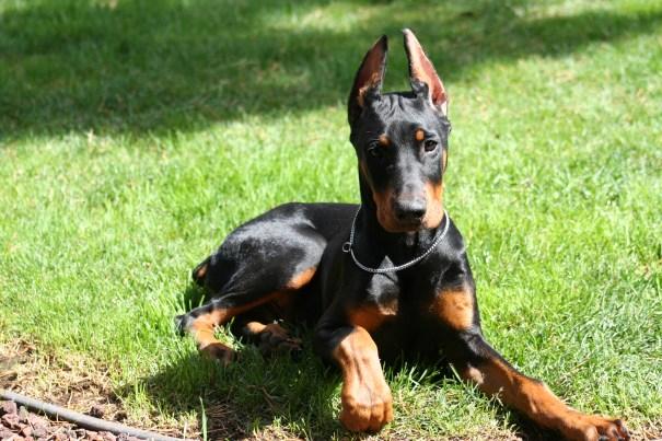 Tucker Puppy