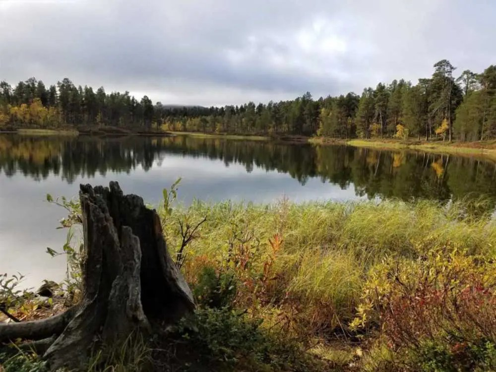 Herbst in der Region Lappland in Finnland