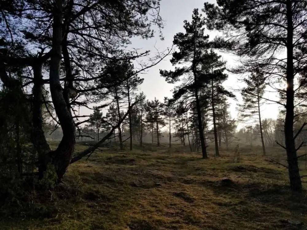Landschaft Baltikum