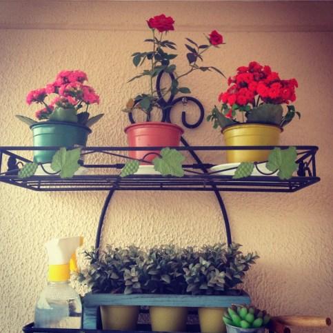 Kalanchoes resistentes ao vento e sol, mini rosa linda que eu adoro, buchinhos e ferramentas de jardim! <3