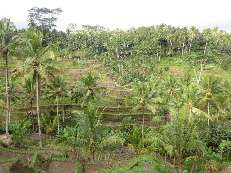 Telalagang rice terrace