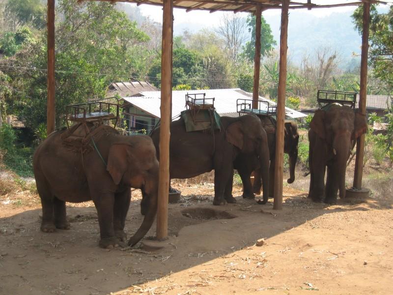 elefantes-cadeirinha-tailandia