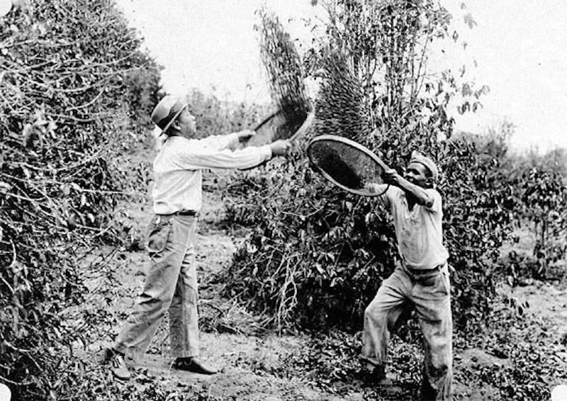 Os primeiros imigrantes trabalharam em fazendas