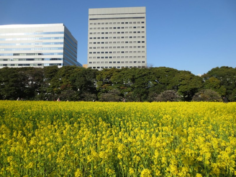 Tokyo_hama rikyu gardens
